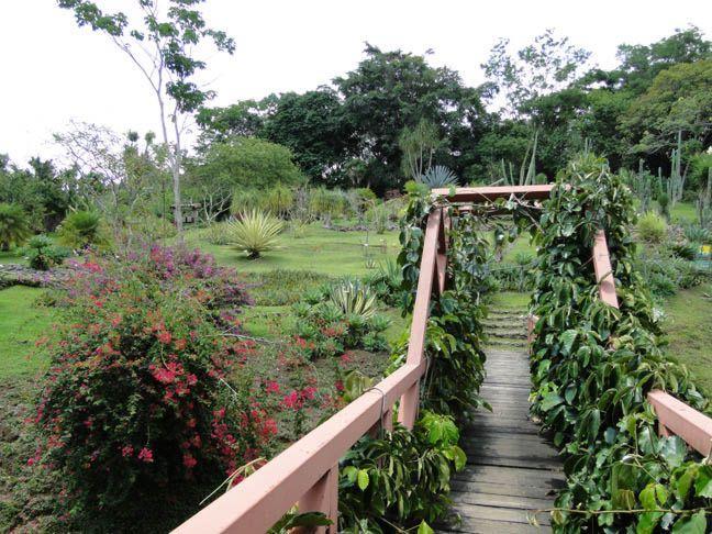 Botanical Gardens Sarchi Costa Rica Garden Ftempo