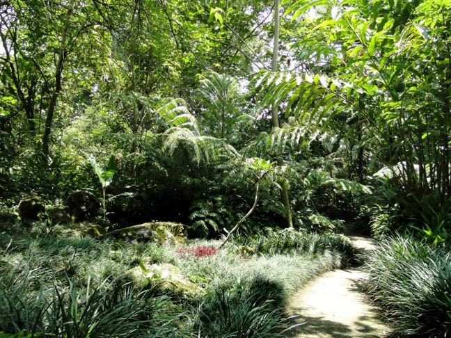 Jard n bot nico else kientzler costa rica for Jardin botanico horario